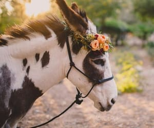 animals, flowers, and wreath image