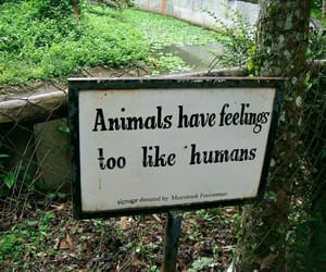 animal, feelings, and quotes image