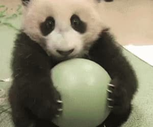 panda, cute, and ball image