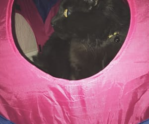 black cat, house, and pink image