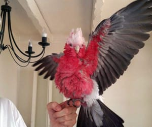 animal, parrot, and aesthetic image