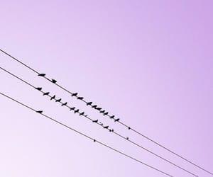 aesthetic, bird, and purple image