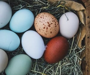 colors, egg, and pascoa image