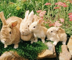 bunny, animal, and rabbit image