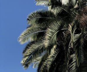 blue, palm trees, and california image