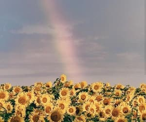 flowers, sunflowers, and rainbow image