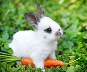 bunny, rabbit, and carrot image