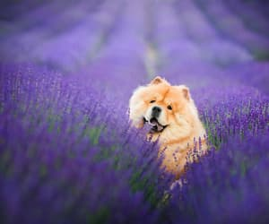 amazing, dog, and spring image