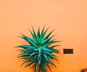 orange, green, and theme image