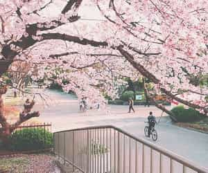 article, cherry blossom, and for you image