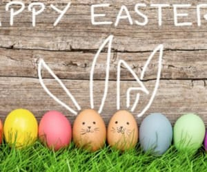 bunnies, colors, and easter image