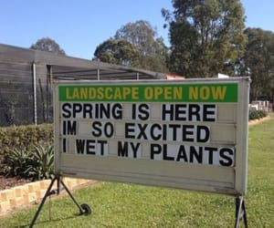 spring, funny, and plants image