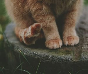 cat, girl, and primrose image