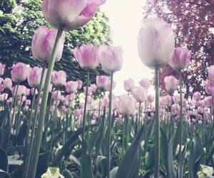 flowers, travelling, and tulips image