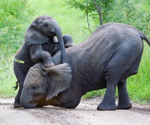 animals, elephants, and son image