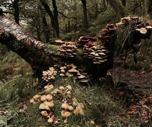 forest, nature, and fungi image