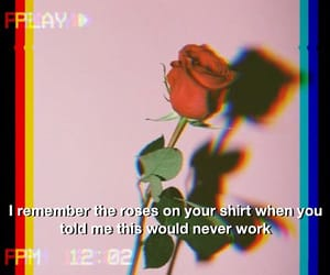 rose, flower, and quote image