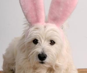 easter, easter vibes, and cute dogs image