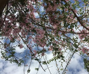 aesthetic, blossom, and clouds image