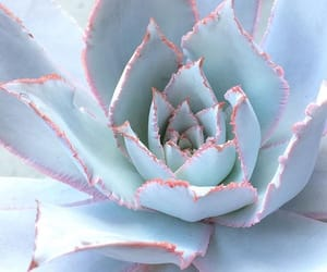 aesthetic, blue, and plants image