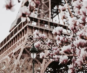 paris, flowers, and tumblr image
