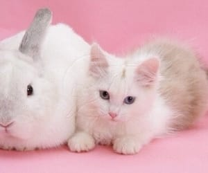 animal, bunny, and cat image
