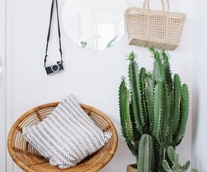 cactus, home, and interior image