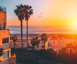 california, sun, and palm image