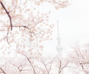 beauty, light pink, and tokyo image