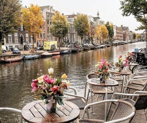 bar, city, and flowers image
