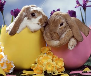 easter, rabbit, and bunny image