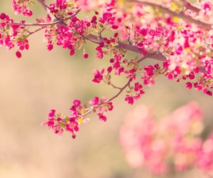 beautiful, flower, and beauty image