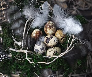 decorations, holidays, and easter image