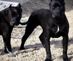 dogs and black image