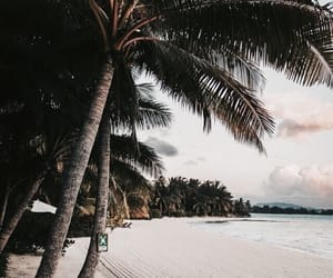 beach, palm trees, and sea image