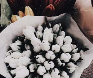 aesthetic, flowers, and fresh image