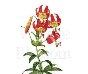 botany, illustration, and clip art image