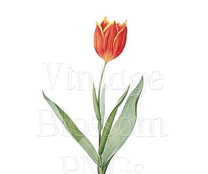 clipart, illustration, and flower clipart image
