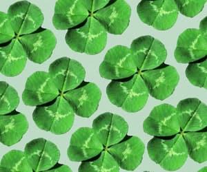 background, clover, and four leaf clover image