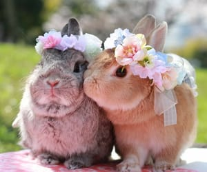 animals, easter, and flowers image