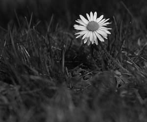 amor, flor, and f image