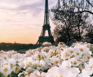 flowers, france, and paris image