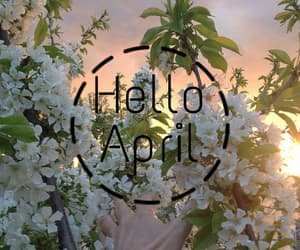 aesthetic, april, and flowers image