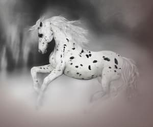 dancing, horse, and white horse image