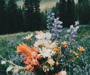 flowers, nature, and photography image