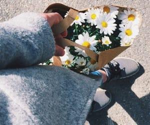 Fleurs, flower, and spring image