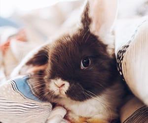 animal, bunny, and eggs image