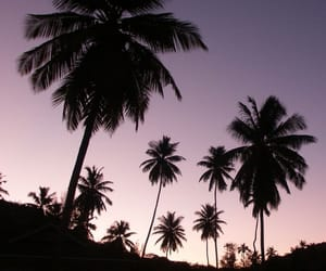 palm trees, sky, and summer image