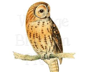 bird, etsy, and owl image