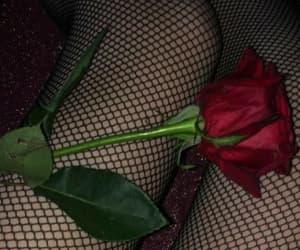 rose, dark, and grunge image